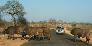 Holiday Kruger Park, South Africa