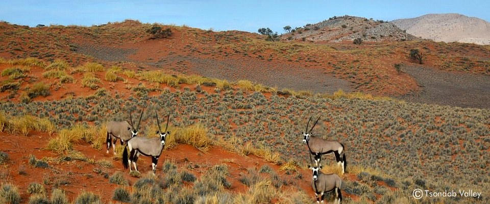 Unforgettable safaris in Namib Naukluft Park in Namibia