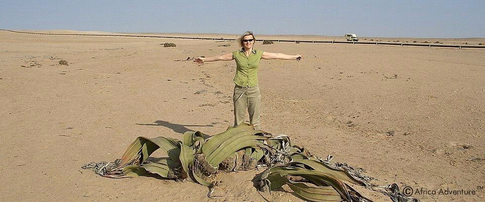 Unforgettable ancient Welwitschia tour in Namibia