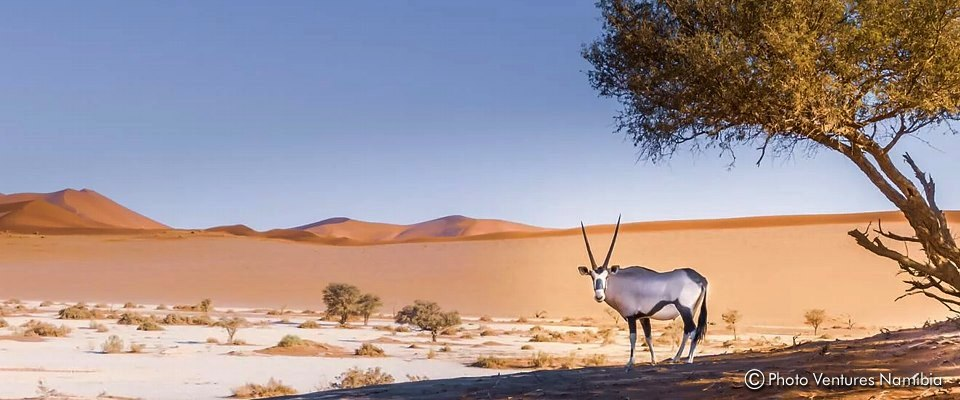 Unforgettable game drive and 4x4 tour at Sossuvlei