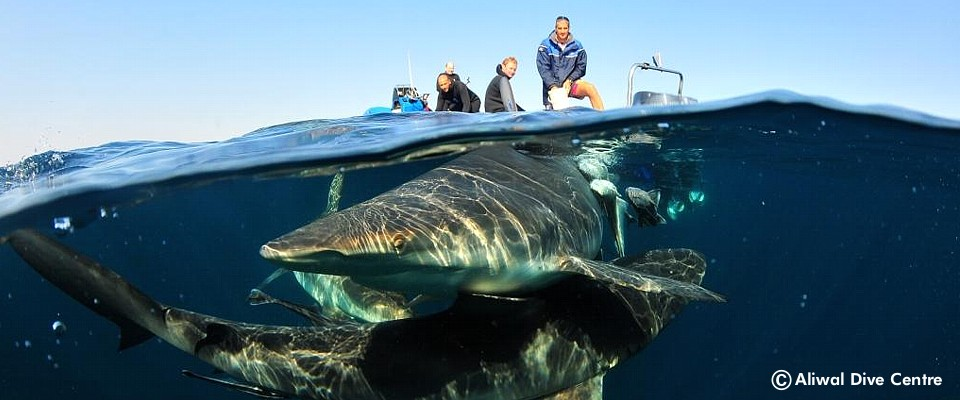 Unforgettable diving in South Africa at the Natal Coast