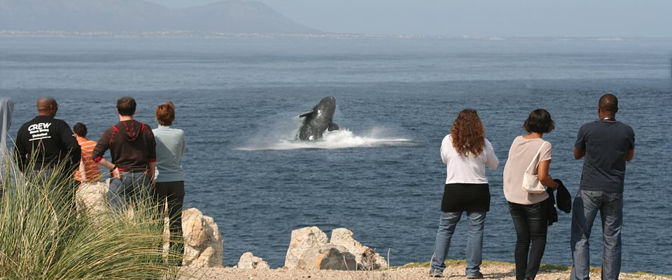 Unforgettable whale watching in South Africa's Hermanus