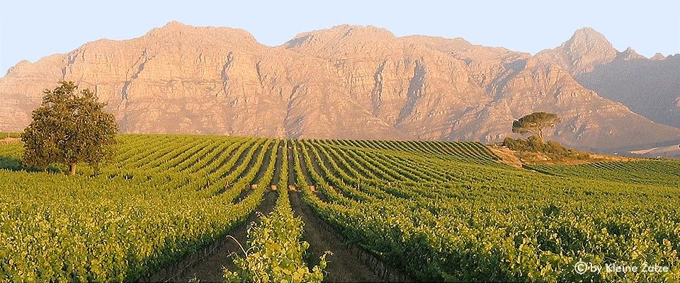 stellenbosch-winelands-africa-adventure.jpg