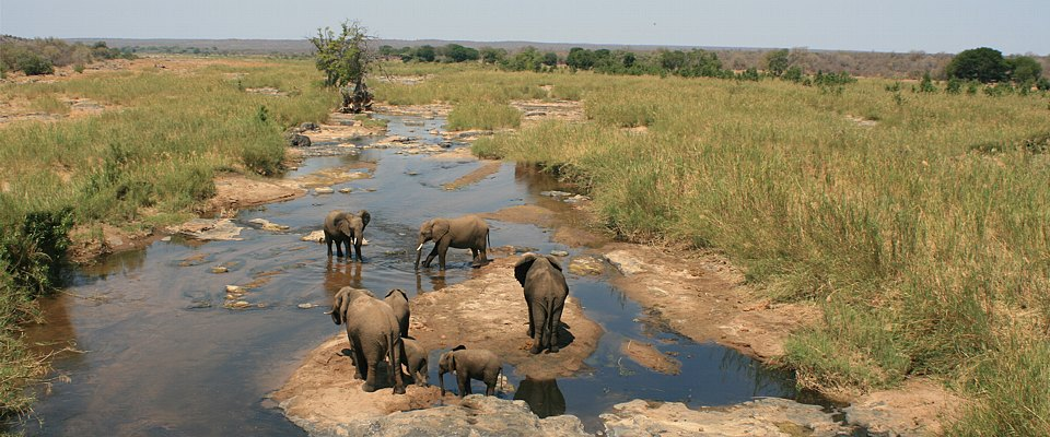 kruger-park-big-5-elephants-africa-adventure.jpg