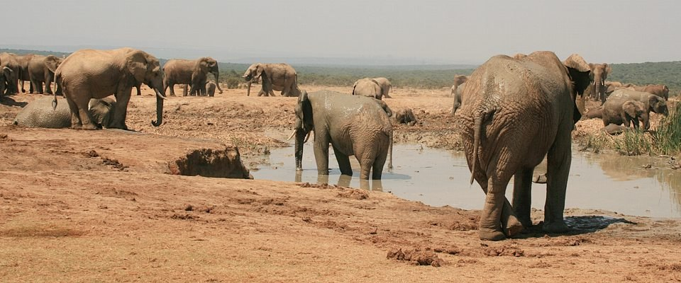 south-africa-addo-elephants-africa-adventure.jpg