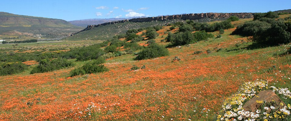 south-africa-wild-flowers-africa-adventure.jpg