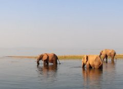 Africa Adventure Travel - Elephants in Lake Kariba