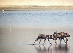 African Ambition Tours and Safaris in Tanzania and Kenya