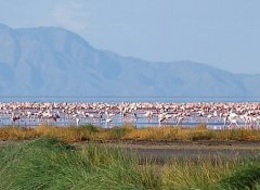 African Ambition Tours at Lake Manyara National Park