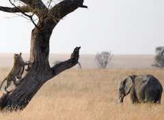 Tailored safari in Tanzania with African Ambition Tours
