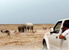 African Profile Self-Drive Safaris and Tours in Namibia