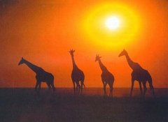 Game in Etosha on African Profile Self-Drive Safaris