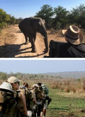 All Africa Tours and safaris in Kruger National Park