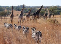 Explore abundant wildlife at the Antelope Park in Gweru