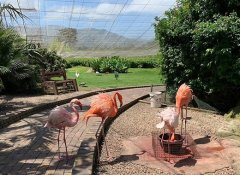 See flamingos in Plettenberg Bay at Birds of Eden