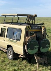 Photographic Tanzanian safari with Bobby Camping Safaris