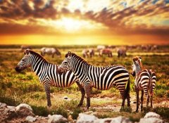 Budget Safari Tanzania Tours and Tour Operator in Moshi