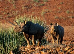 Capricorn Tours, self drive tours & safaris in Windhoek