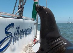 Catamaran Charters, boat trip and sailing in Namibia