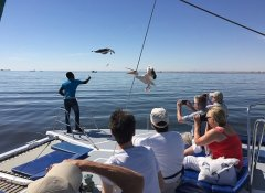 Watch pelicans with Catamaran Charters in Walvis Bay
