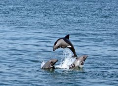 Watch dolphins with Catamaran Charters in Walvis Bay