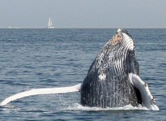 Whale watching with Catamaran Charters, Walvis Bay