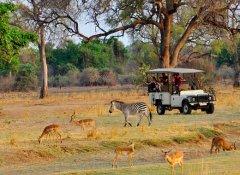 Game viewing at Chikunto Safari Lodge in South Luangwa