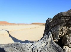 Fly-in-safari in Namibia with Cross Country Air Safaris