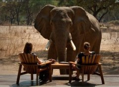 Game watching in Zambia with Cross Country Air Safaris