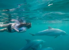 Dolphin Encountours, Activities in Ponta do Ouro