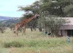 Earthlife Expeditions, Safaris and Tours in Tanzania
