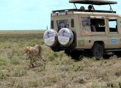 Serengeti safari with Earthlife Expeditions Limited