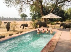 Flatdogs Camp Accommodation in South Luangwa and safaris