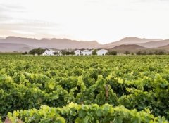 Thornvilla Wine Farm at Fossil Hills in Cape Winelands
