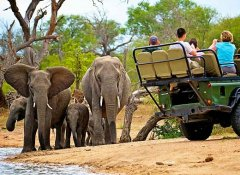 Kruger Park game drive with Go Self-Drive Tours & Safari