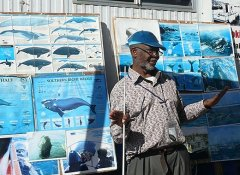 Whale information at Hermanus Whale Cruises in Overberg