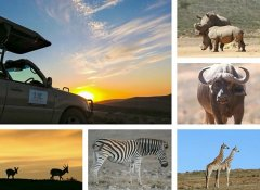 Indalu Game Reserve african wildlife and nature in Mossel Bay