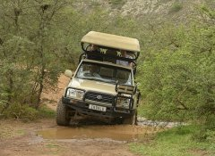 Game drive at Indalu Game Reserve in Mossel Bay