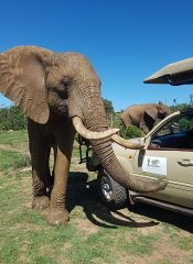 Indalu Game Reserve and african wildlife on the Garden Route