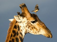 Indigo Safaris and guided Tours in Africa