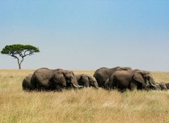 Indigo Safaris and guided tours in southern Africa