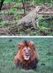 Game watching in Africa with Indigo Safaris and tours