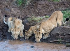 Indigo Safaris in Kenya and tours in East Africa