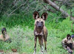 Indigo Safaris in Kruger Park and Tours in South Africa