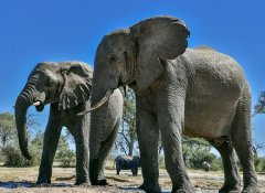 See elephants with Indigo Safaris at Mosi-oa-Tunya