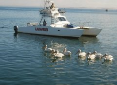 Laramon Tours and boat trips in the Namib Region