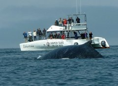 Whale watching in Swakopmund with Laramon Tours