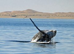 Laramon Tours and whale watching in Walvis Bay