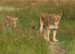 Linked2satours, Guided Tours & Safaris in South Africa