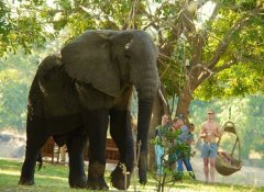 Marula Lodge - Elephant walking the grounds